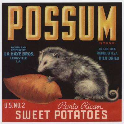 YAMS possum